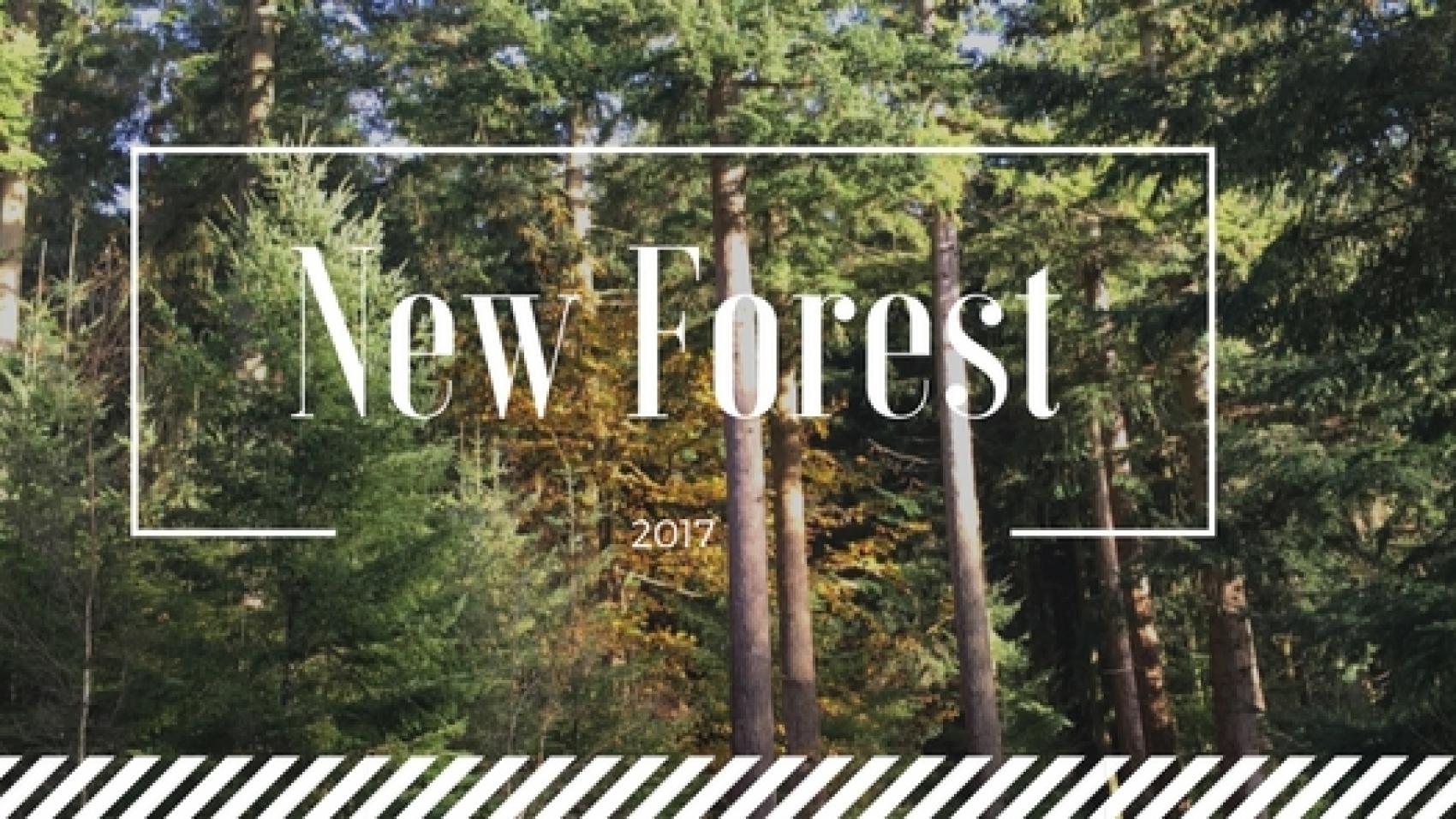newforest1